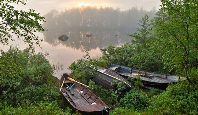 Puuveneitä rantapusikossa järven rannalla kesäisessä aamu-usvassa